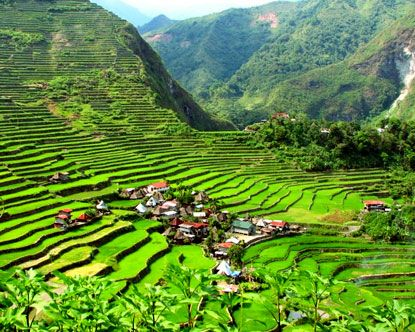 Sagada Rice Terraces