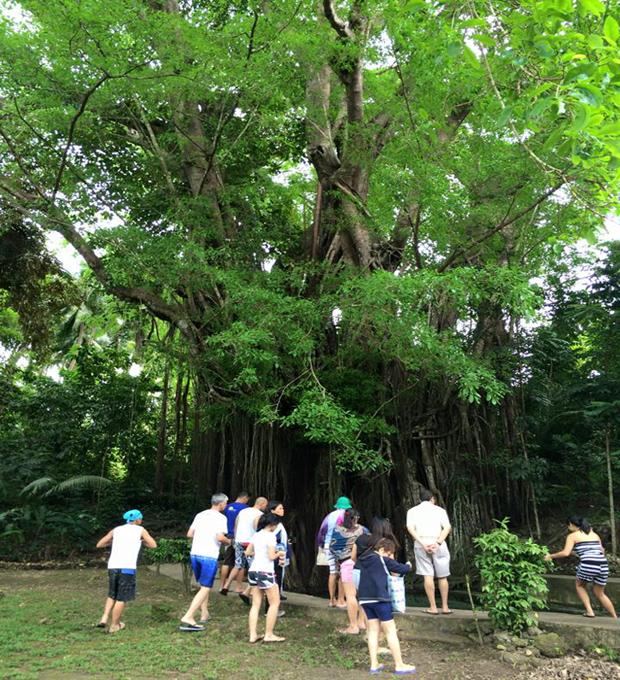 balete tree Dumaguete