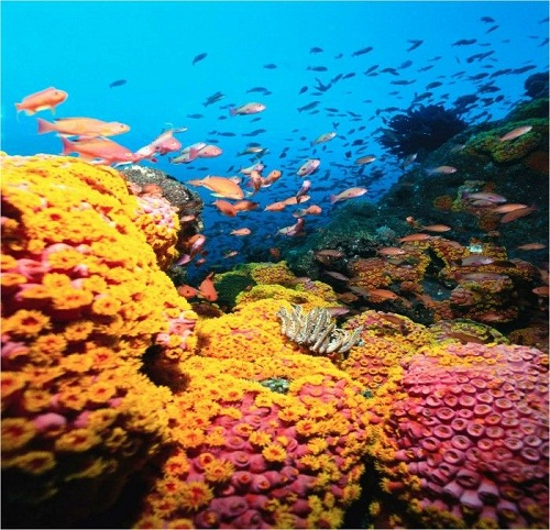 Andros Barrier Reef